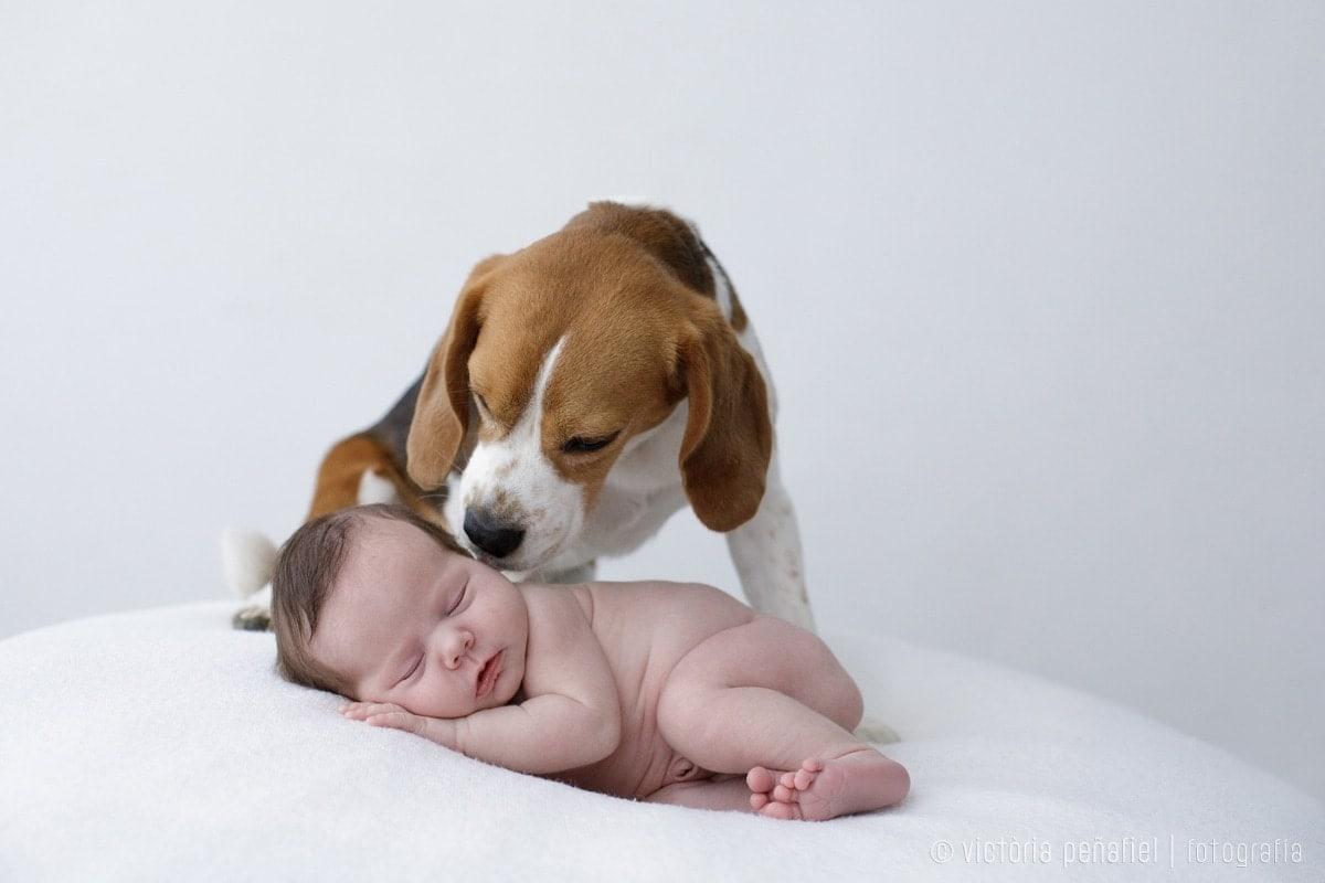 Perro dando un beso a un bebé recién nacido